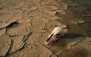 Dry-Bones
