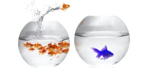 Join-in-the-fun-and-do-the-Big-Fish-Little-Fish-dance-now
