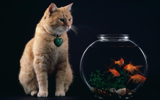 Temptation_-_Cat_and_Goldfish_Bowl.jpg
